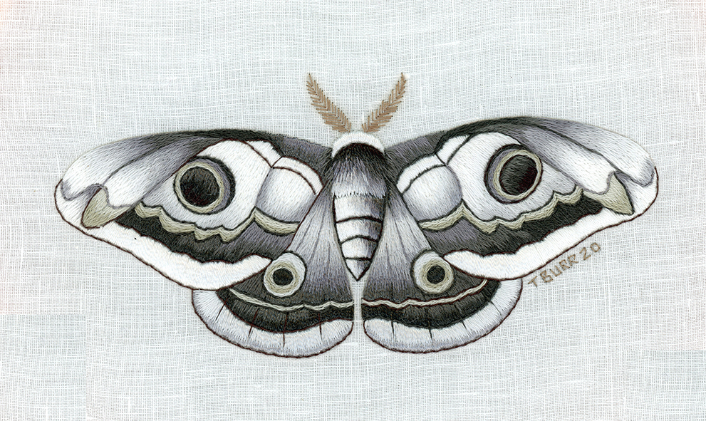 Monochrome moth